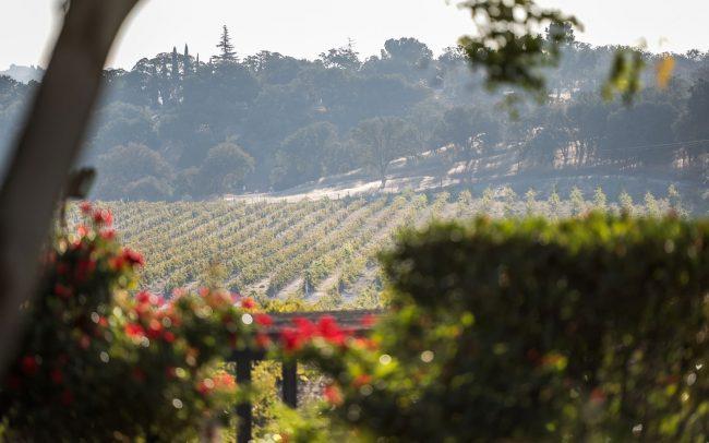 CaliPaso Winery vineyards